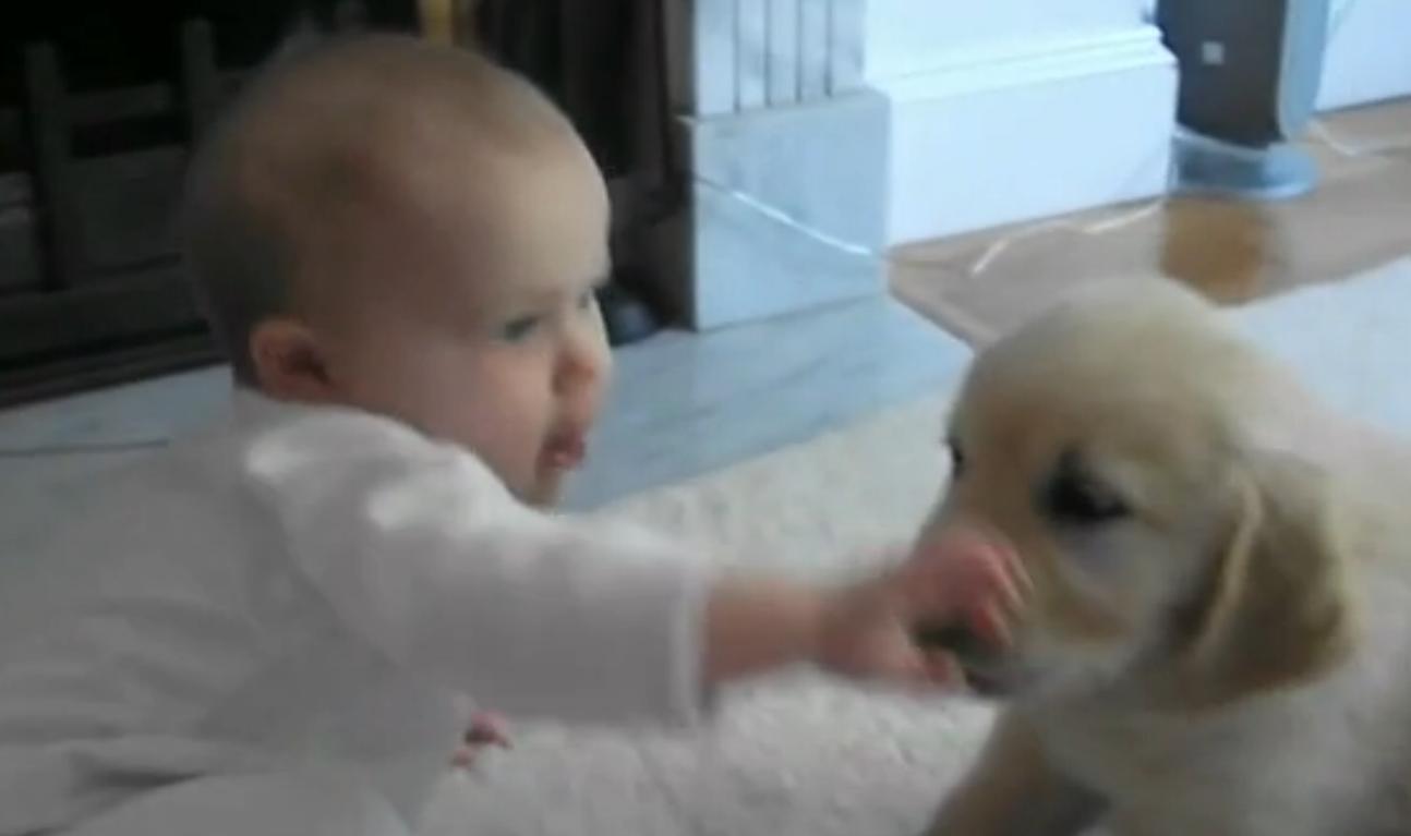Hunde spielen mit Babys