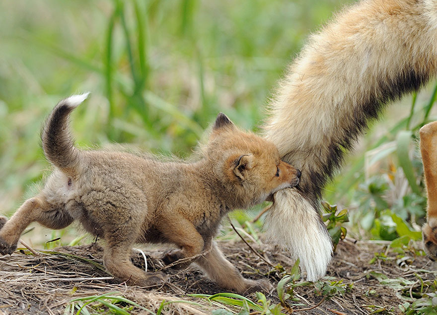 Süße Tierbilder