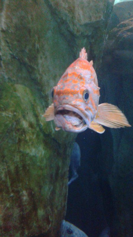 wenig fotogener fisch