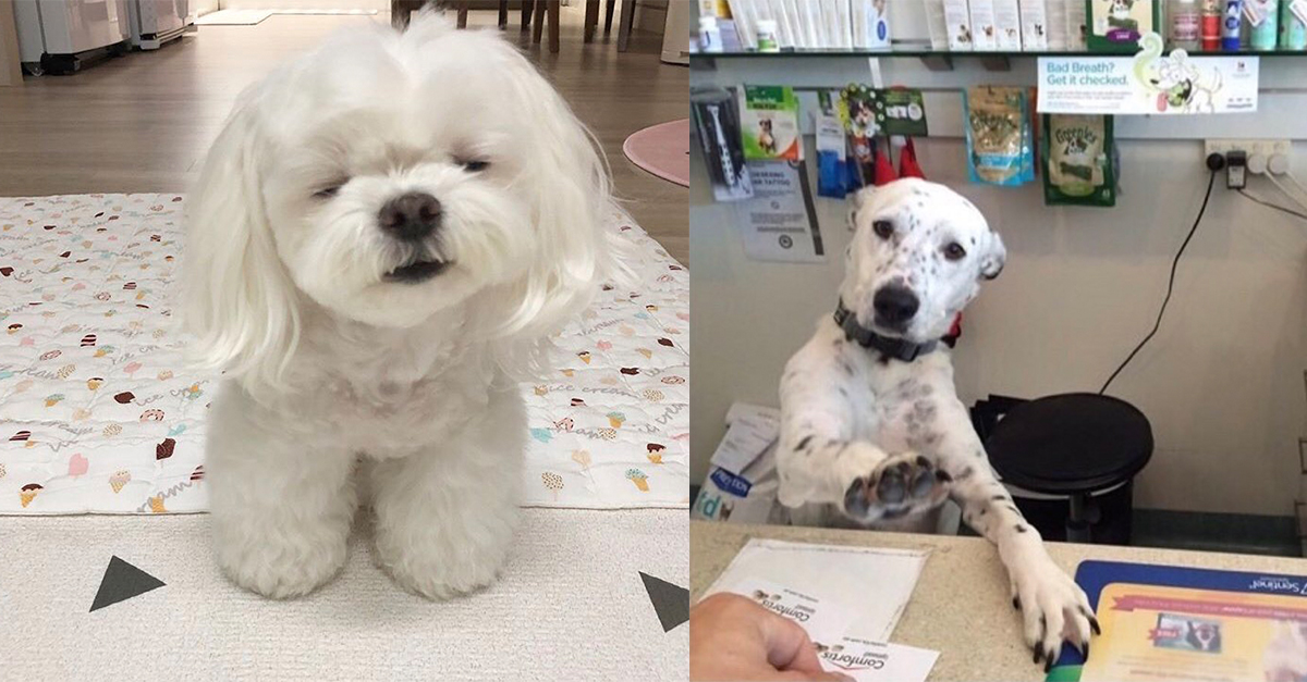 These 25 Tweets about Dogs are Funny and adorable!