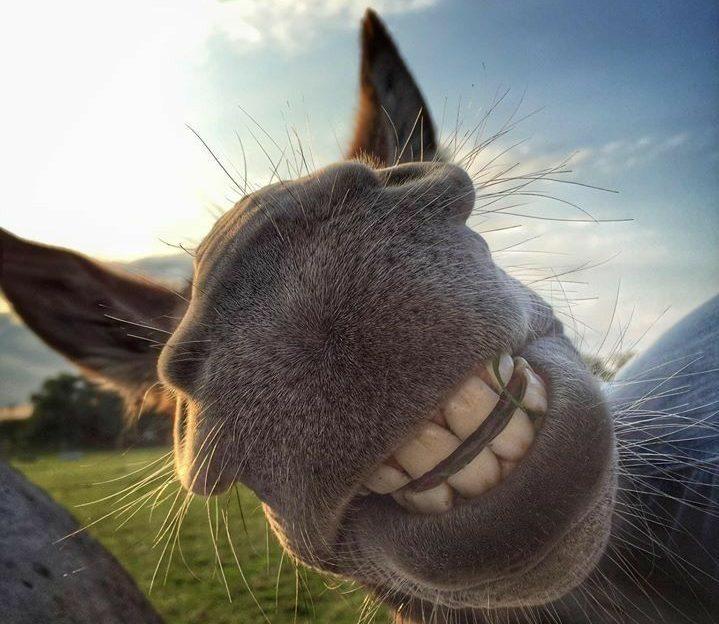 20 Lustige Pferde