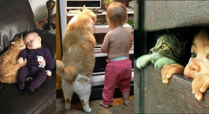 18 Gründe in Bildern, warum Kinder mit Katzen aufwachsen sollten
