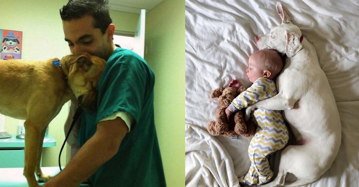 11 Beispiele, in denen Tiere ihren Rettern dankbar sind.